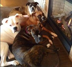 in front of the fire for a Sunday Morning Cuddle.