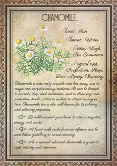 Printable Herbs Book of Shadows Pages Set 1 Herbs & Plants Correspondence Grimoire Pages Witchcraft Wicca Printable BOS Wicca Herbs, Witchcraft Herbs, Witchcraft Books, Green Witchcraft, Magic Herbs, Herbal Magic, Herbal Witch, Plant Magic, Wiccan Spell Book