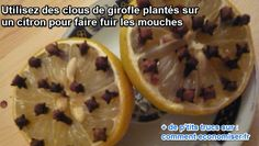clous de girofle et citron font fuir les mouches Diy Cleaning Products, Cleaning Hacks, Flylady, Tips & Tricks, Good Housekeeping, Green Cleaning, Home Hacks, Kitchen Hacks, Better Life