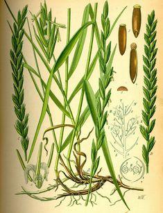 ochrana pred komármi v túre Glass Vase, Health, Plants, Painting, Health Care, Painting Art, Paintings, Plant, Painted Canvas