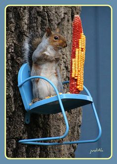 How simply great is this???? What a fantastic squirrel feeder!  I want it!