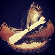 Chipmunk in Canoe Taxidermy Available 👉⏩www.RoyalRatel.com⏹ #squirrels #Chipmuck #chipmucks #chipmucktaxidermy #Royal #RoyalRatel #Taxiermy #collector #cabinetofcuriosities #creative #nature #curio #oddity #oddities #oneofkind #rare  #nature #roadkill #Specimen #weird #roadkill #rare #antique #amazing