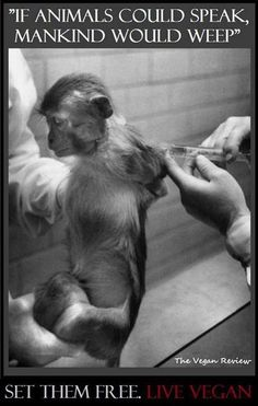 Horrible reality of animal testing.