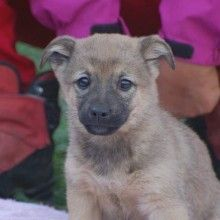 We search for forever families in the UK to adopt Spanish stray rescue dogs that have been rescued from the streets of Spain Stray Dog, Rescue Dogs, Spanish, Adoption, Animals, Foster Care Adoption, Animales, Animaux, Spanish Language