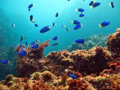 セブ島?いいえ伊豆です!屈指の透明度を誇る秘境「ヒリゾ浜」の海が超美しい | RETRIP[リトリップ]