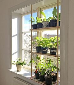 Inspiring Floating Window Plants Design Ideas Home Ideas Window Plants, Hanging Plants, Plants Indoor, Outdoor Plants, Garden Plants, Plant Design, Garden Design, Diy Furniture Decor, Garden Windows