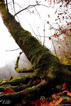 Wood - Matteo Marinelli Photographer - Matteomarinelli.com