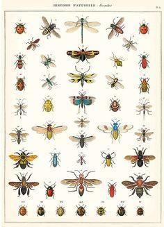 CV Decorative Wrap  Natural History Insects
