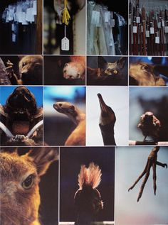 Top Art Exhibition - Photography » NZQA Color Photography, Boards, Artist, Animals, Colour, Models, Google Search, Top, Planks