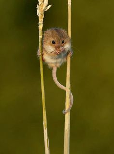 Field mouse!