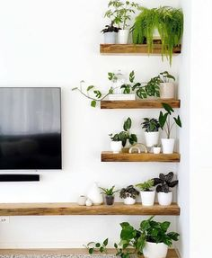 House Plants Decor, Plant Decor, Living Room Tv, Home And Living, Plants For Living Room, Plantas Online, Küchen Design, House Design, Plant Shelves