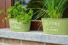 A Life Lounge: Kruiden in een potje, peterselie http://alifelounge.blogspot.be/2014/10/kruiden-in-een-potje.html Herbs, Kruiden, DIY