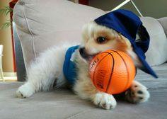 Jackson, Basketball, Dog, Diy Dog, Doggies, Netball, Dogs