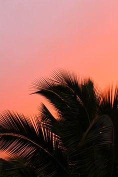 Sunset, palm tree.