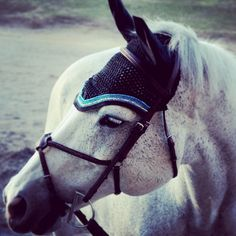 Hey horse friends! Interested in custom bonnets for your jumper? Check out @ccfillyfinery and follow them on Facebook at C&C Filly Finery. Totally custom bonnets, with prices starting at $80.00. (More products coming soon!) #fillyfinery #prettyproductsforprettyponies