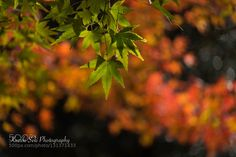 A nature and me - autumn goes by by KazukiSeki. @go4fotos