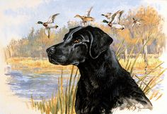 Pure Class, Black Lab and Mallards Artwork, Framed Print