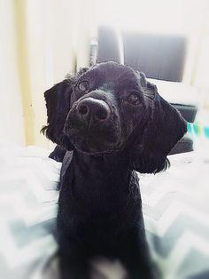 my dog. Kamu.