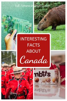 On my travel's, I meet a lot of people with some pretty serious misconceptions about Canada, (Yes, we have indoor plumbing! 2nd Grade Christmas Crafts, Fun Facts About Canada, Interesting Facts About Me, Polar Bears Live, Wasaga Beach, Old Commercials, History For Kids, Northwest Territories, Good Excuses