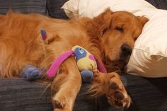 """20 Dogs Who Understand The Struggle Of Being A Lazy Person - The relief you feel when you're home relaxing on the couch and your friend suddenly cancels your plans. """"A magnetic force field could not pull me out of this position right now. Melatonin For Dogs, Animals And Pets, Cute Animals, Funny Animals, Lazy Person, Dog Whisperer, Sleeping Dogs, Dog Behavior, Dog Care"""