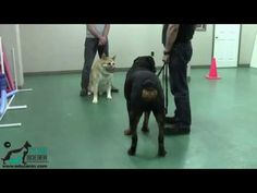 Calmer un chien en 15 secondes - YouTube