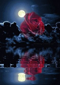 1 million+ Stunning Free Images to Use Anywhere Beautiful Rose Flowers, Flowers Gif, Beautiful Love Pictures, Beautiful Moon, Good Night Wishes, Good Night Sweet Dreams, Romantic Gif, Free To Use Images, Butterfly Wallpaper
