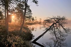 Morning Mist at a Forest pond | July 2016 | Photo: Pekka Hatunen