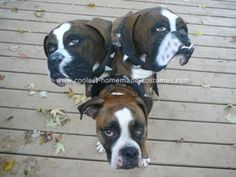 Coolest Homemade Cerberus Costume & 158 best Pet Halloween Costumes images on Pinterest | Homemade ...