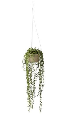 Luxury Faux Senecio String Of Pearls Hanging Plant Hanging Plants Outdoor, Fake Plants Decor, Hanging Pots, Faux Plants, Plant Decor, Potted Plants, Indoor Plants, Types Of Succulents, String Of Pearls