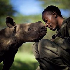 A touching moment between orphaned black rhino, Baby Kitui and conservation keeper Elias Mugambi of @lewa_wildlife