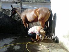 G.A.R.R.A. - Grupo de Ação, Resgate e Reabilitação Animal: Gita nossa égua se feriu. Ajude!