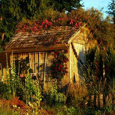 garden shed . . . by dragonflydreams88, via Flickr
