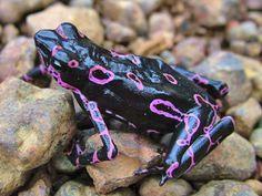 Beautiful pink pattern tree frog