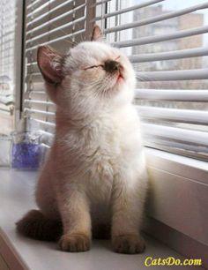 A fluffy persian cat enjoying sun bath