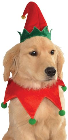 Amazon.com : Rubies Costume Christmas Collection Pet Costume, Medium to Large, Elf Hat with Bell : Dog Hats Large : Pet Supplies