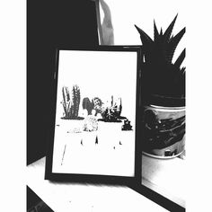 Cactuses picture by Lavinkworld on Etsy