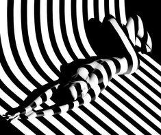 Francis Giacobetti, optic stripes Zebra 17, 1988, photographie estimée entre 12.000 et 15.000 euros. (Maison de ventes Cornette de Saint Cyr). Cet artiste remarquable, reconnu comme l'un des plus grands photographes contemporains, récipiendaire de prestigieux prix de photographie et de direction artistique, nous présente une série mythique, ZEBRAS (ou Optic Stripes). Des nus vêtus d'ombres. Des corps dévoilés par la lumière. Un jeu magistral d'éclairages qui dessinent des formes…