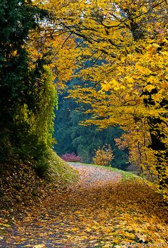 ~~Autumn Peace | Pruhonice, Central Bohemian Region, Czech Republic | by episa~~
