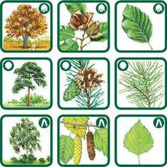 Preschool Education, Elementary Science, Preschool Activities, Autumn Activities For Kids, Science For Kids, Montessori, Teaching Plants, Tree Study, Living Off The Land