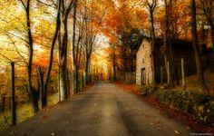 La casa nel bosco - Immagini e emozioni
