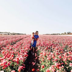 Mama in bloom at the Carlsbad flower fields