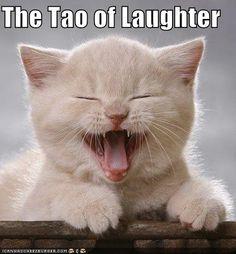 Tao cat
