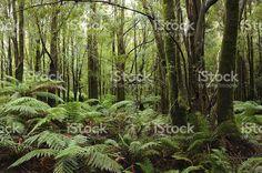 Franklin-Gordon Wild Rivers Parc National de Tasmanie photo libre de droits