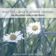 Why the grass is alw