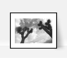 37 Ideas Photography Nature Trees National Parks For 2019 Teen Photography, Nature Photography, Travel Photography, Joshua Tree National Park, National Parks, Nature Tree, Nature Nature, Photo Tree, Tree Print