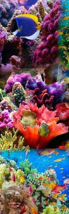 Underwater Life Beauty.