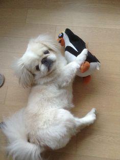 My penguin!
