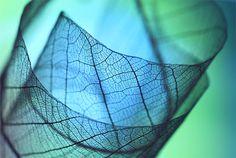 A fragile beauty: stunning leaf macro photography by Shihya Kowatari - Blog of Francesco Mugnai