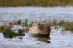 Животные в фотографиях http://chert-poberi.ru/interestnoe/zhivotnye-v-fotografiyax-9.html {{AutoHashTags}}