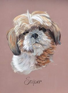 Pas à pas : Portrait réaliste de Shih-Tzu au pastel sec par l'artiste animalier Cindy Barillet Chien Shih Tzu, Watercolor Sketchbook, Eye Painting, Dog Paintings, Pastel Art, Dog Portraits, Pictures To Paint, Dog Art, Art Tutorials